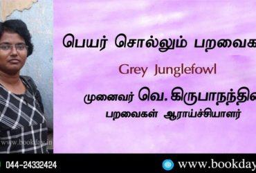 Grey Junglefowl Name Telling Birds Series Article by V Kirubhanandhini. Book Day Website is Branch of Bharathi Puthakayalam.