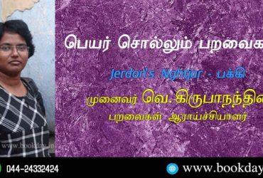 Jerdon's Nightjar Name Telling Birds Series Article by V Kirubhanandhini. Book Day Website is Branch of Bharathi Puthakayalam.
