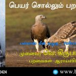 Pallas's Fish-Eagle Name Telling Birds Series Article by V Kirubhanandhini. Book Day Website is Branch of Bharathi Puthakayalam.