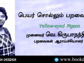 Yellow-eyed Pigeon Name Telling Birds Series Article by V Kirubhanandhini. Book Day Website is Branch of Bharathi Puthakayalam.