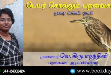 Ardeola grayii Name Telling Birds Series Article by V Kirubhanandhini. பெயர் சொல்லும் பறவைகள் 15 – நாரை   முனைவர். வெ. கிருபாநந்தினி