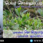Palani Laughingthrush Name Telling Birds Series Article by V Kirubhanandhini. Book Day Website is Branch of Bharathi Puthakayalam. பெயர் சொல்லும் பறவைகள் 14 - பழனி சிலம்பன் (Montecincla fairbanki) | முனைவர். வெ. கிருபாநந்தினி