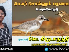 Charadrius leschenaultia: Name Telling Birds Series 19 Article by V Kirubhanandhini. பெயர் சொல்லும் பறவை 19 - உப்புக்கொத்தி Charadrius leschenaultia
